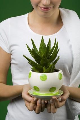 Влияние комнатных растений на человека