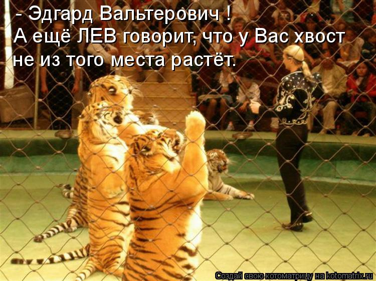 Котоматрица - А ещё ЛЕВ говорит, что у Вас хвост - Эдгард  Вальтерович ! не из того м