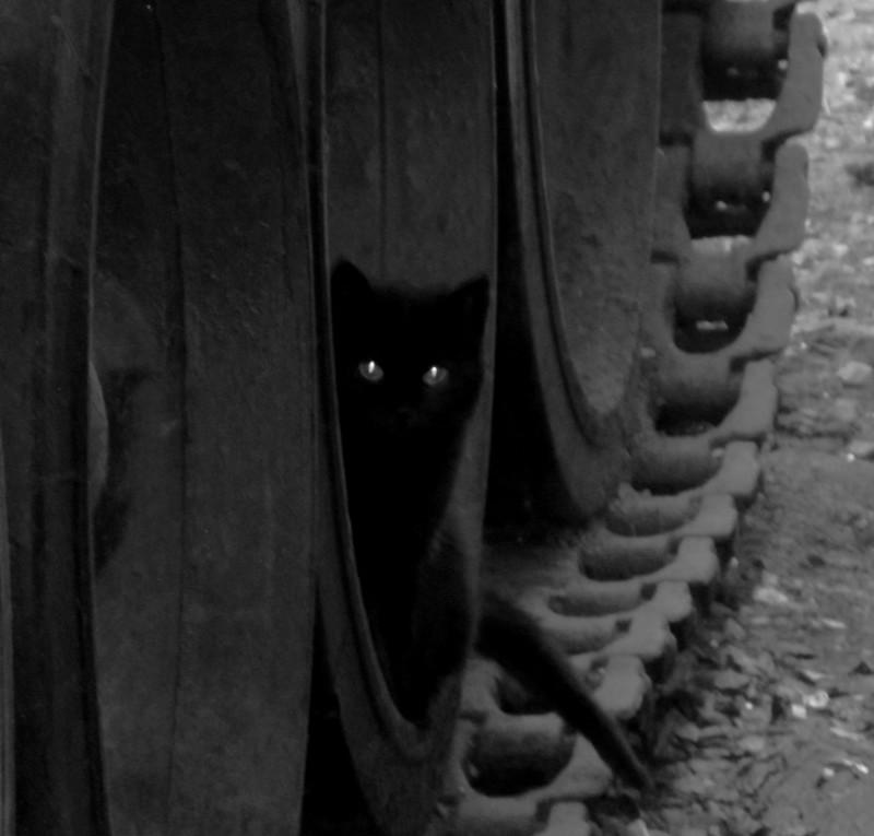 Продолжаю наблюдение. бронетехника, животные, коты