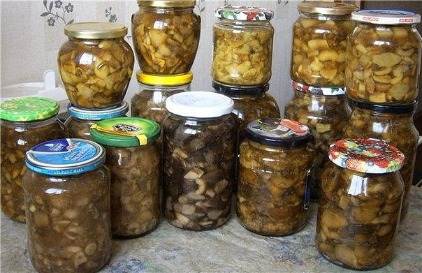 10 заготовок грибов на зиму.