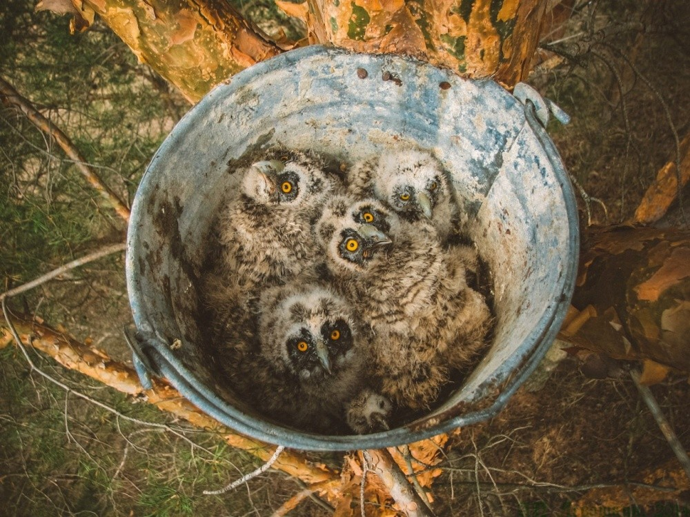 natgeo12 Topo Fotografias National Geographic setembro