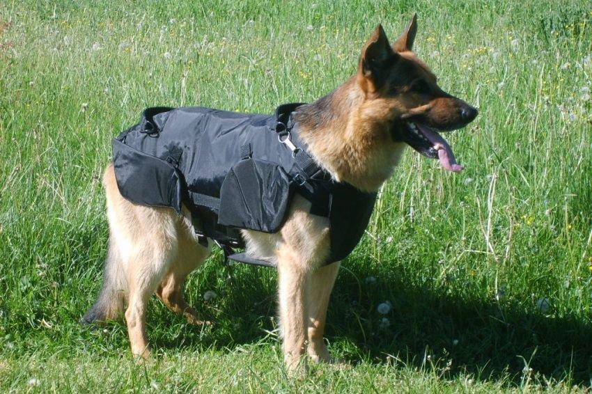 Штурмовых собак одели в бронежилеты