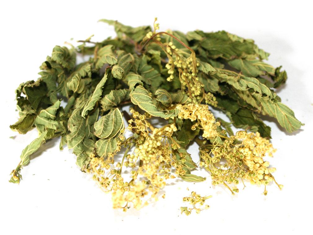 Лекарственные травы вяжущего действия