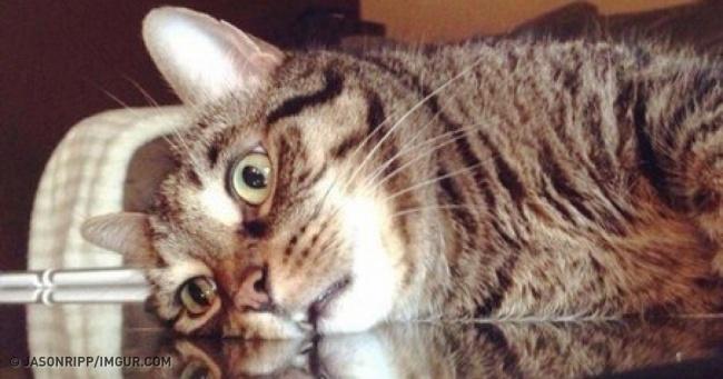 19бесподобных котов, которые родились, чтобы прославиться
