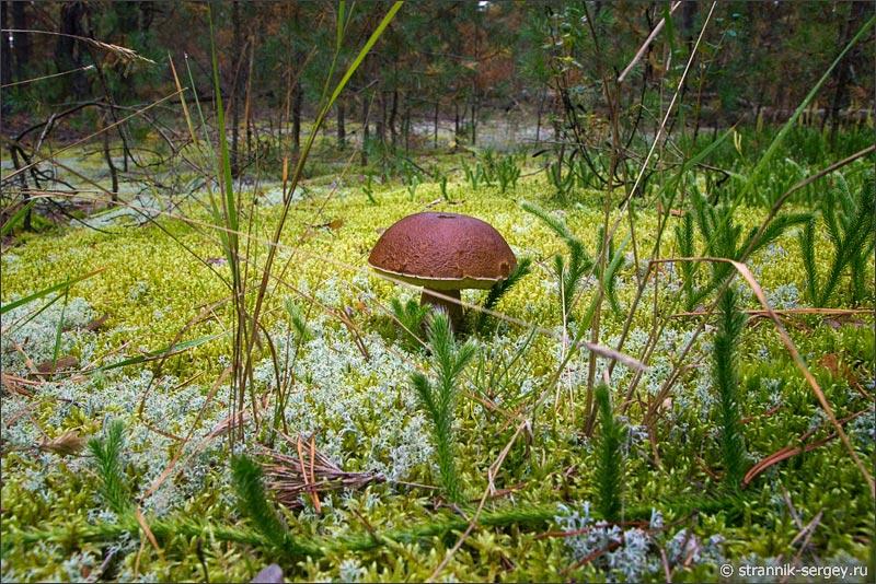 По грибы и ягоды в красивый лес