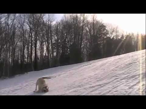 Собаки катаются со снежной горки