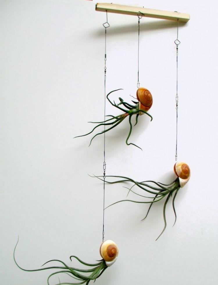 13. Тилландсия дом, растения