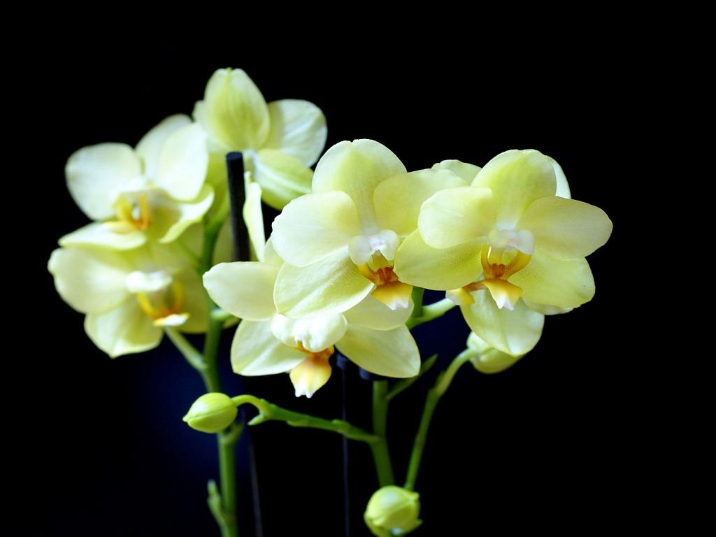 Пошаговая инструкция по пересадке орхидеи