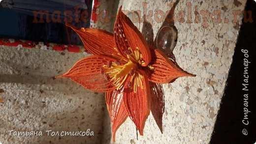 Цветы в петельчатой технике. Мастер-класс по квиллингу