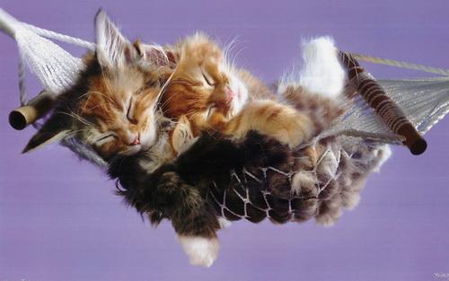 Спят усталые игрушки, наши звери-симпатюшки!!!!