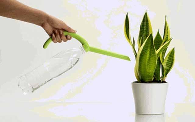 plants0115-18.jpg