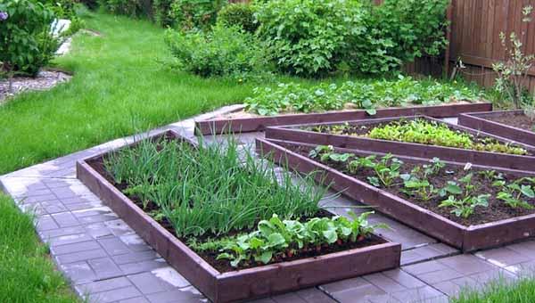 Дизайн огород своими руками