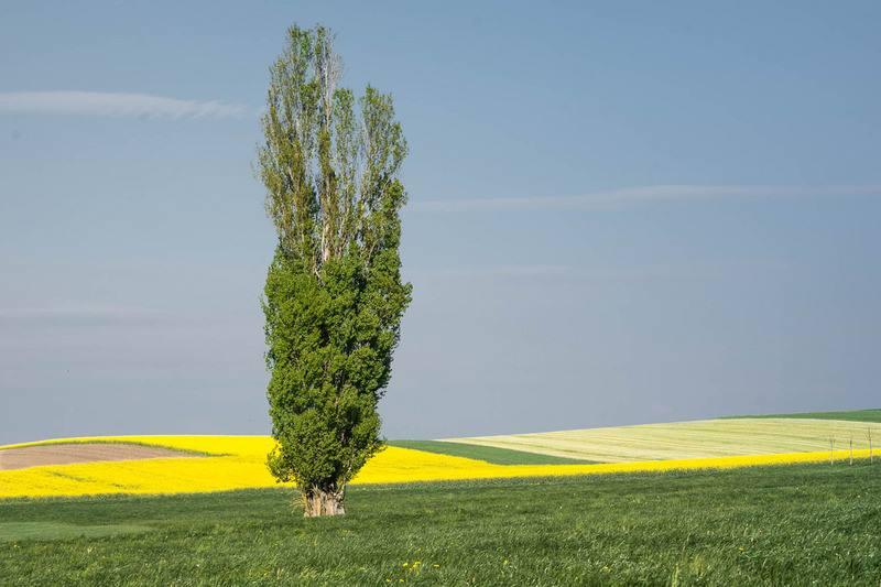 Деревья с положительной и отрицательной энергетикой