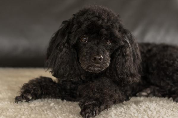 Как 65-летняя российская пенсионерка взяла 20 000 рублей в кредит, чтобы вылечить бездомную собаку