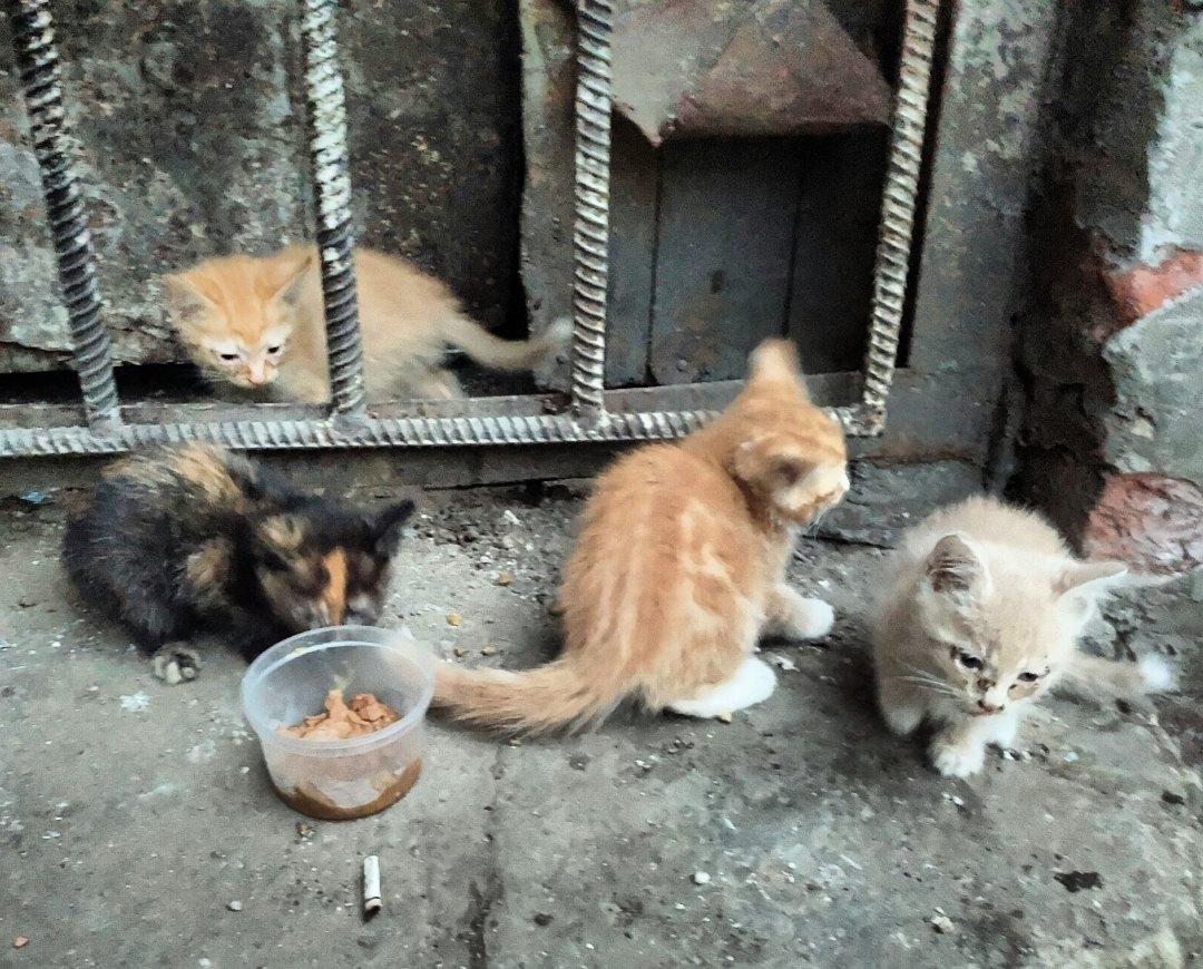 Скоро холода, на улице эти крохи погибнут! Помогите малышам выжить!