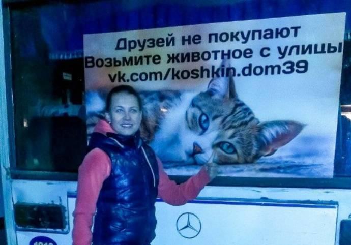 Калининградский автобус помогает кошкам найти новых хозяев