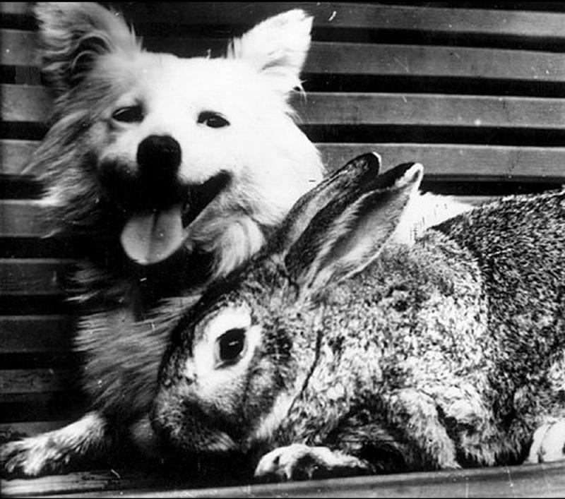 animalspace05 История покорения космоса животными