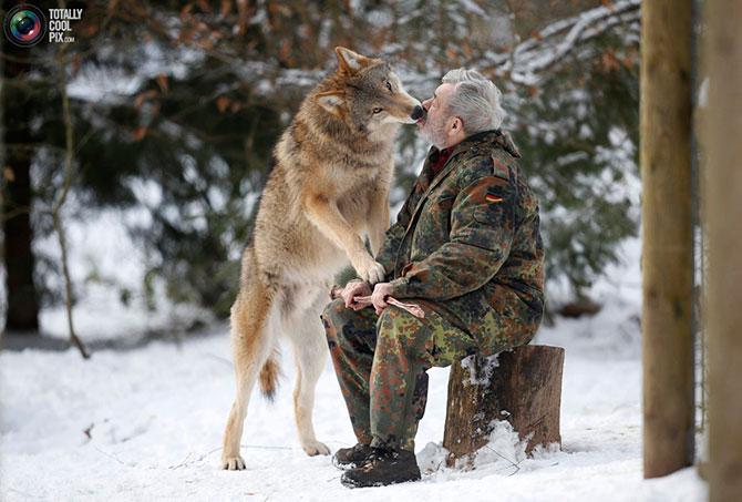 Парк волков Вернера Фройнда в Германии