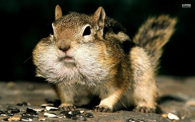 15 бурундуков которые знают, что орехов много не бывает