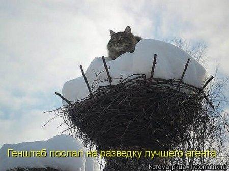 1415168672_kotomatritsa_t (450x337, 94Kb)