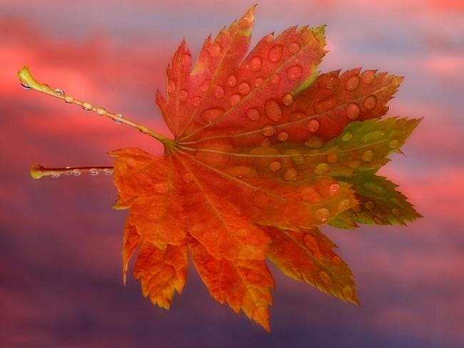 Осень (23 фото)
