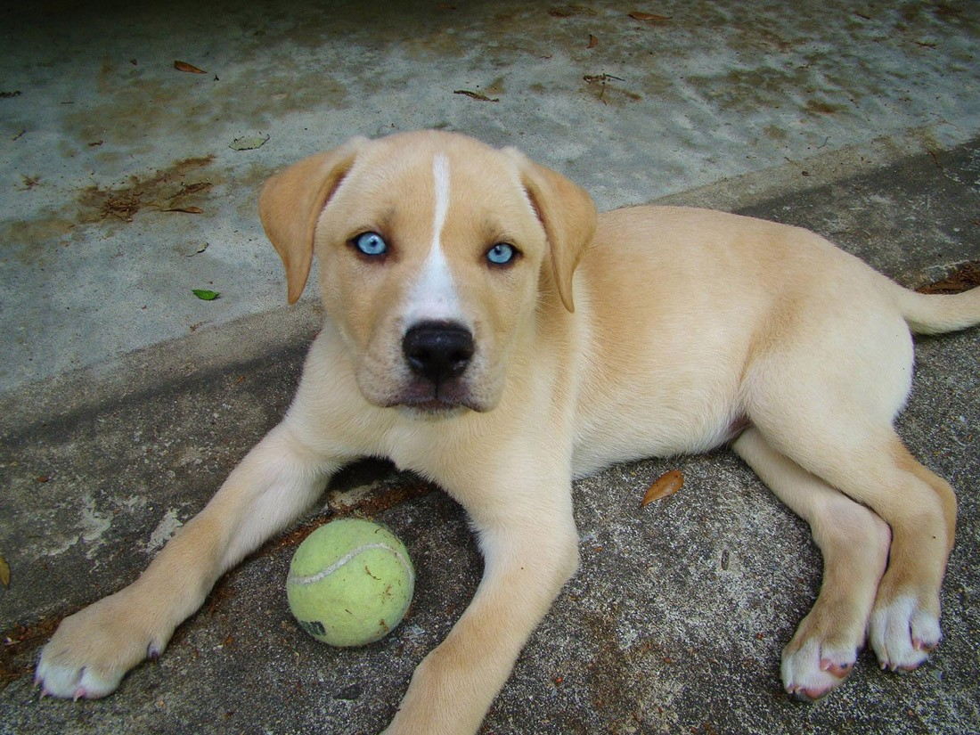 dogmixes05 Cамые необычные породы собак