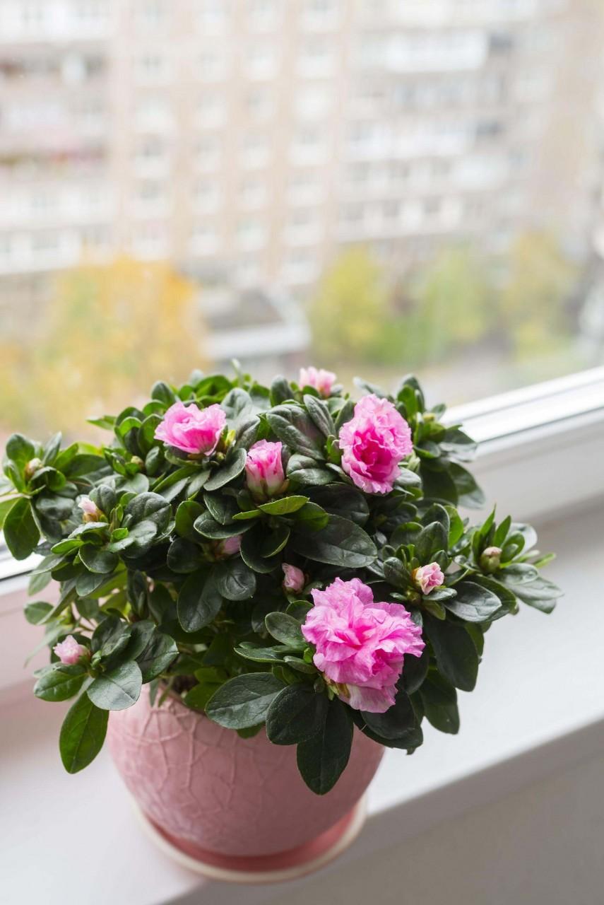 Комнатные цветы и их названия и фото которые цветут зимой