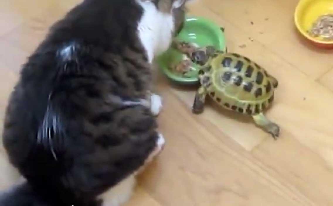 Черепашка атакует!