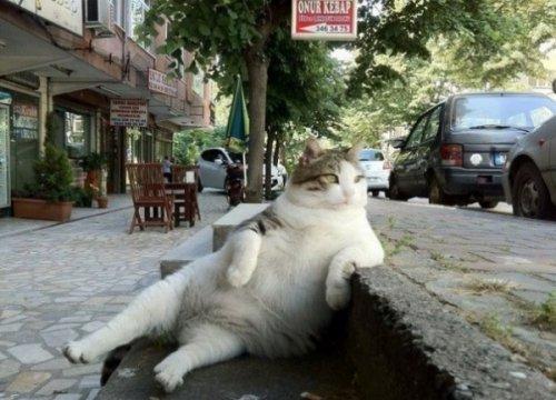 catrules01 15 правил жизни настоящего кота