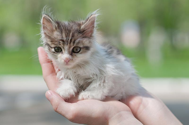 7 советов тем, кто подобрал котенка
