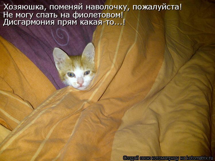 Котоматрица - Хозяюшка, поменяй наволочку, пожалуйста! Не могу  спать на фиолетовом!