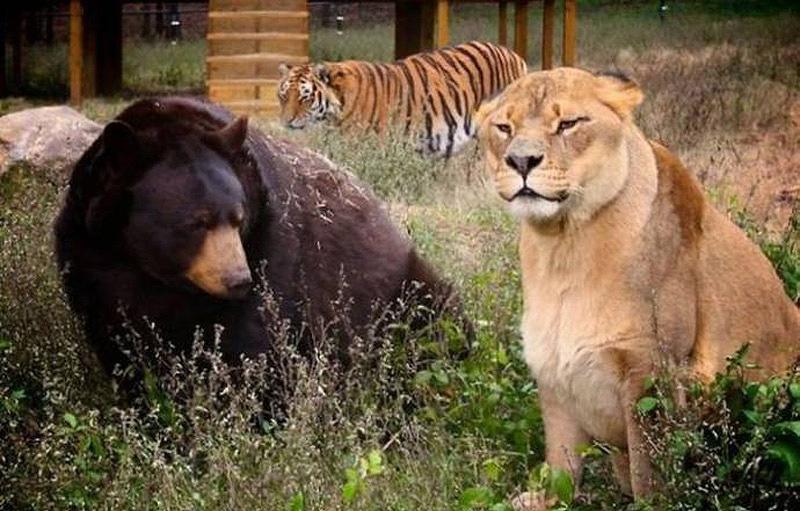 unbelievablefriendship 3 Невероятная дружба трех хищников