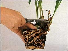 Как переваливать и пересаживать растения