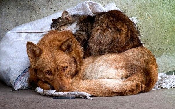 Бездомные друзья.. Интересные факты со всего мира