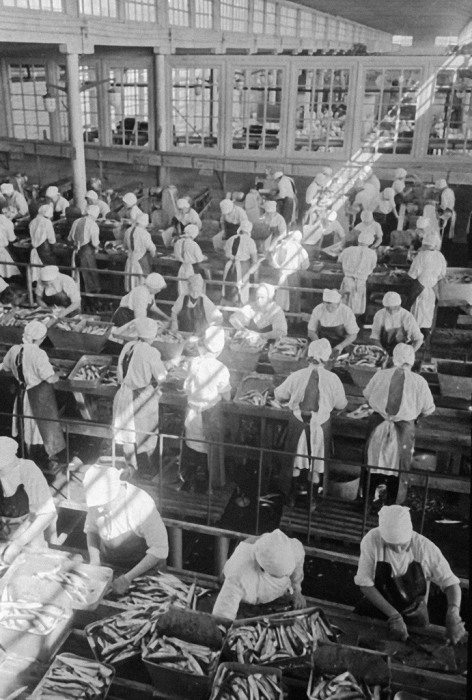 Завод по переработке сайры на острове Шикотан, 1969 год. | Фото: commons.wikimedia.org.
