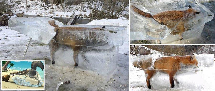 Ледяная могила для лисы