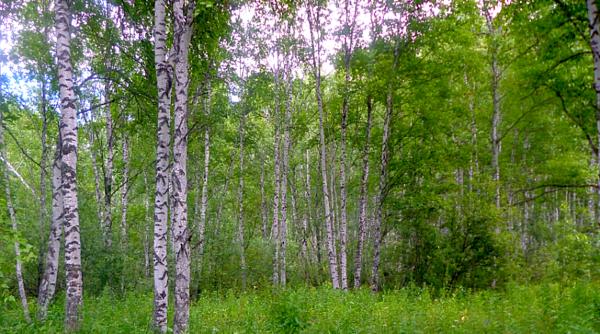 История из копилки странностей. Находка в лесу