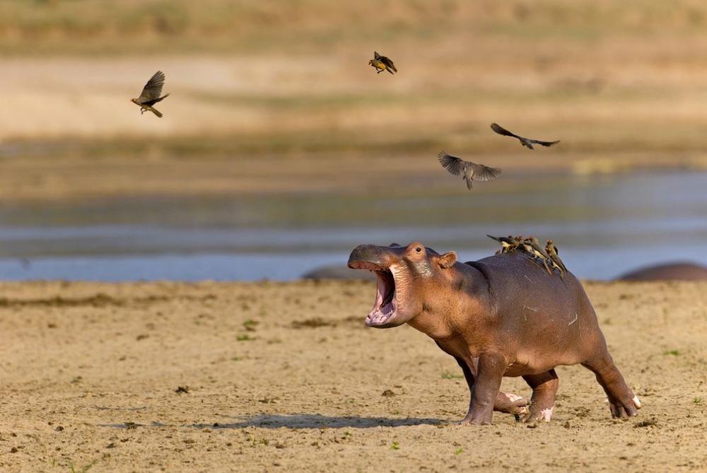 Лучшие фотографии National Geographic за август