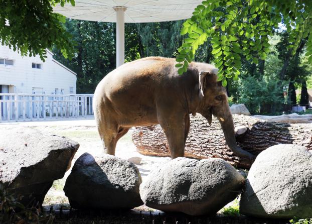 Вечеринки в киевском зоопарке приводят к гибели животных