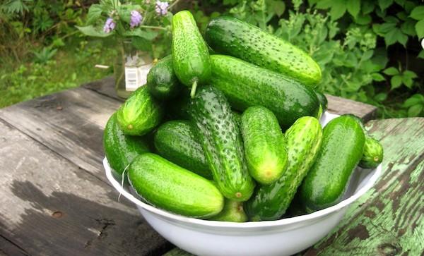 6 причин, почему огурцы дают плохой урожай
