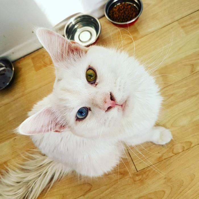 Кот Тихон, который очень люб…