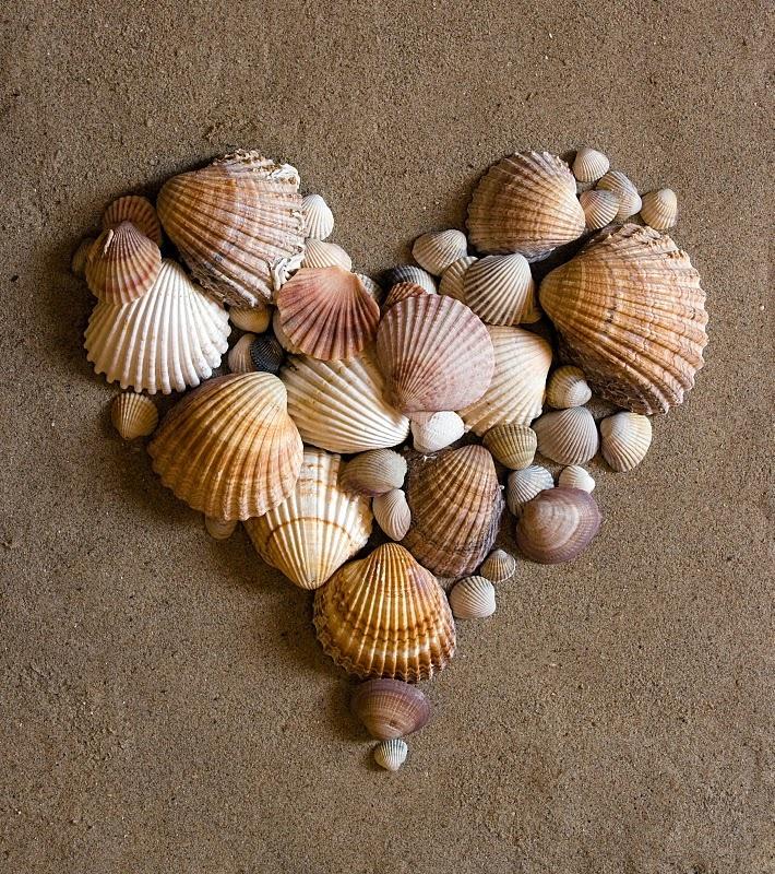 Shell искусства