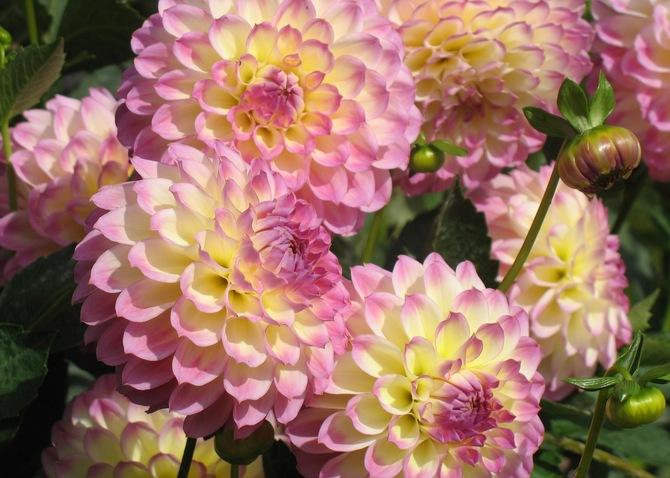 Осенние цветы. Обсуждение на LiveInternet - Российский Сервис Онлайн-Дневников