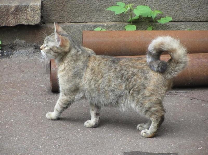 """Бывают и коты породы """"Лайка"""" бронетехника, животные, коты"""