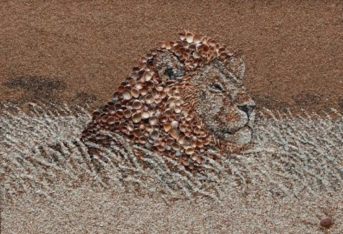 Из песка и ракушек (14 фото)