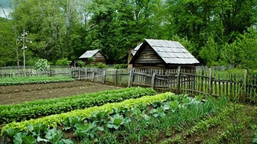 """""""Вредные"""" советы огородникам и садоводам…"""