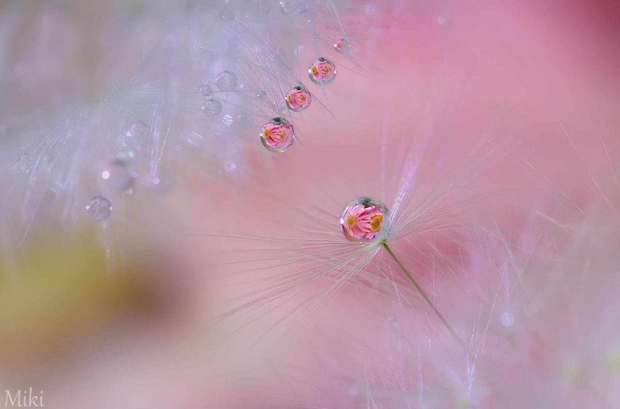 Фотография Before we fly away автор Miki Asai на 500px