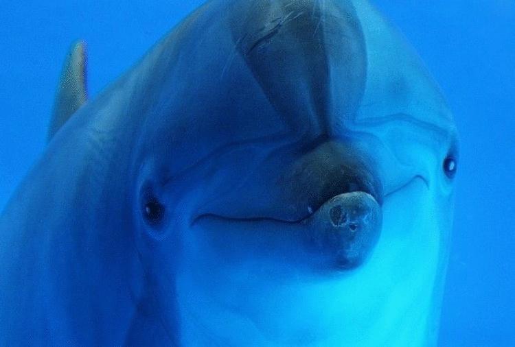 Правда ли дельфины такие умные?