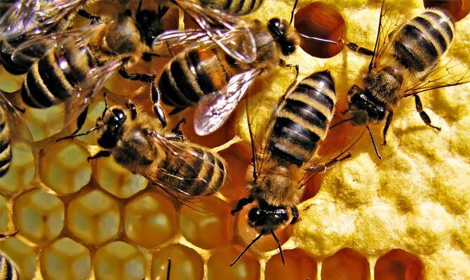 Интересные факты о пчелах + Видео
