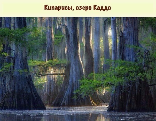 Удивительно, но эти деревья растут на нашей планете